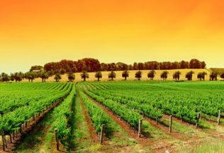 http://www.blaxwine.com.au/wp-content/uploads/2013/10/Blaxland-Wine-Group-Australian-wine-industry-vineyard-with-palm-trees-626x350.jpg