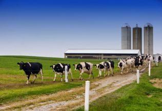 Dairy Farm 1