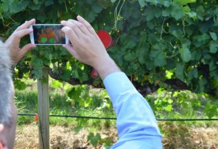 Technological innovation helps measure water stress of grapevines | Australian Food News