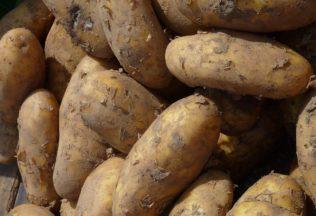 potato-1475521_960_720